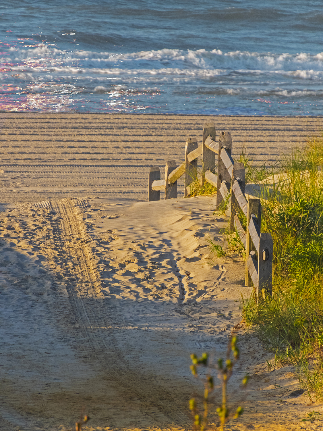 Becky Diamond - Beach Path in the Morning - Ocean City, New Jersey