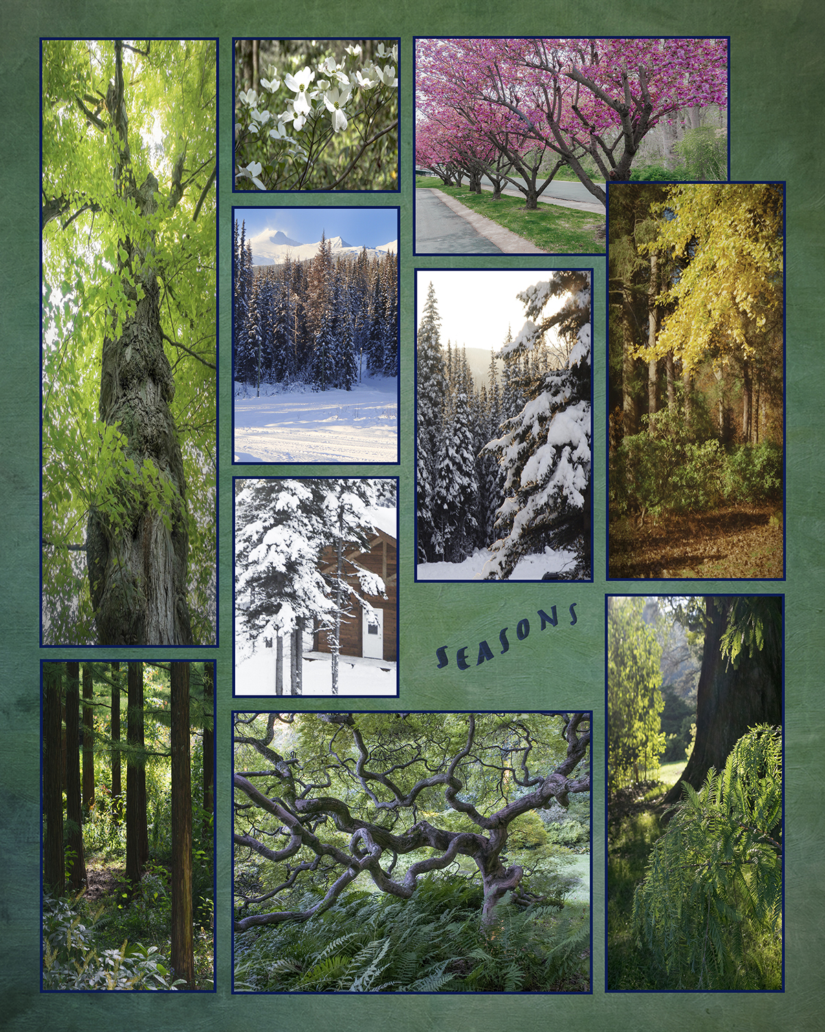Carolyn Ray - Seasons - Trees in Various locations - Delaware and British Columbia