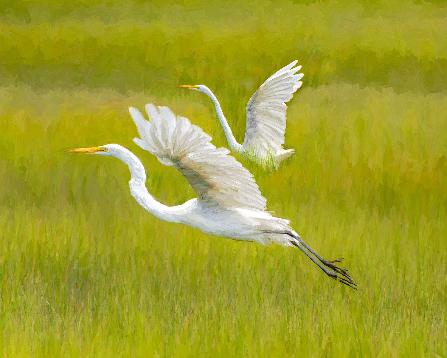 David Aloisio - Egrets in Cape May, New Jersey