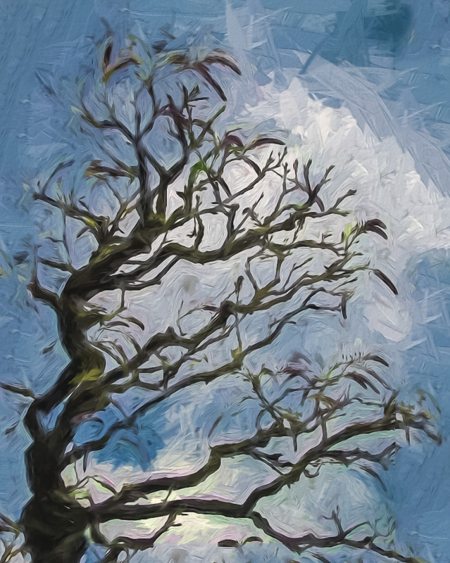 Trisha Vierling - Monet's Tree