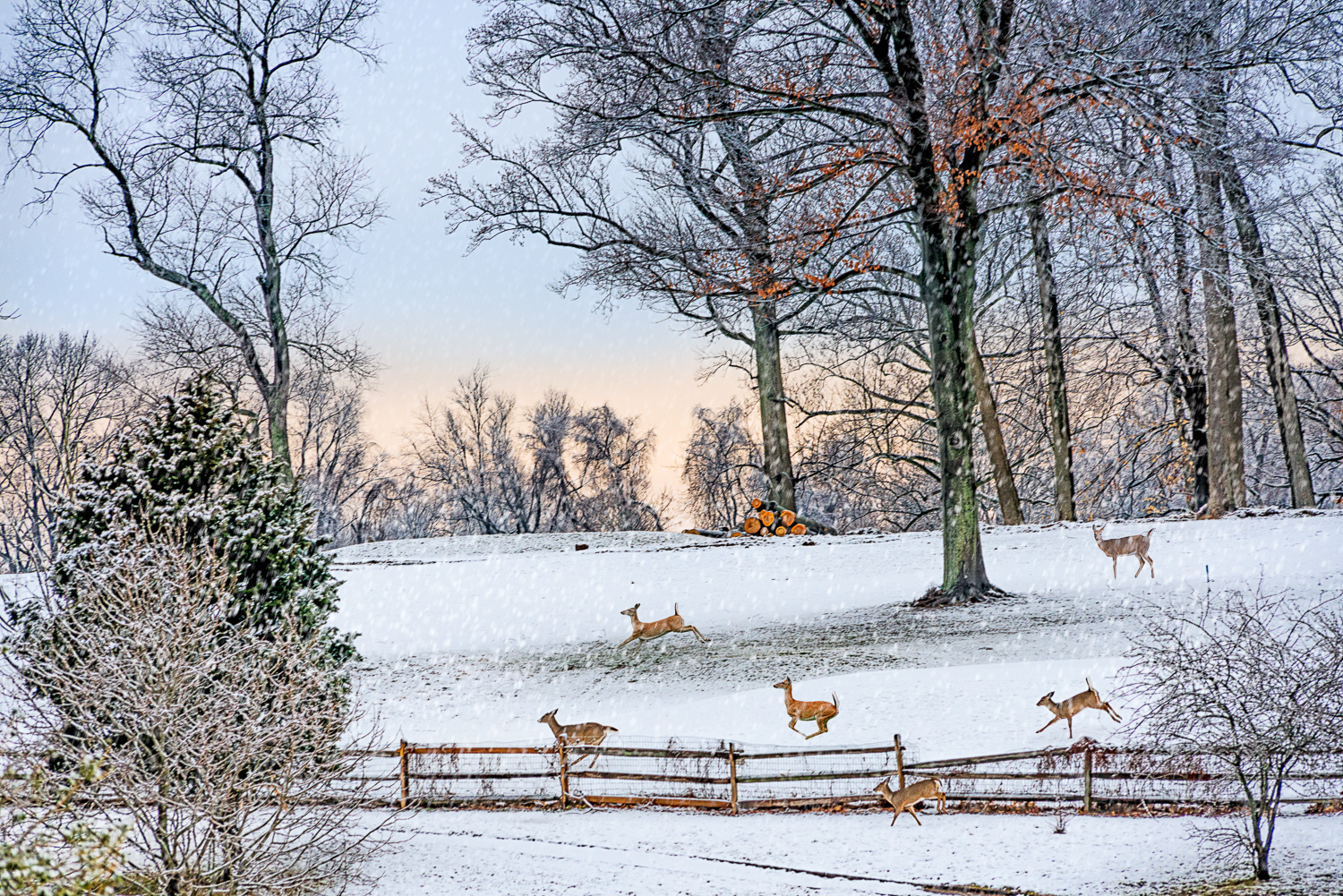 SNOW 2016-02-05-0012-NIK-Deer-Photo-Filter-Snow-Copy